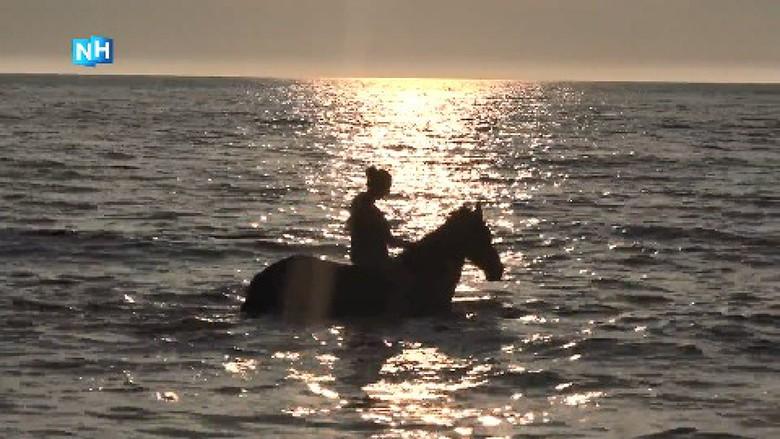 Paarden nemen verfrissende duik in zee